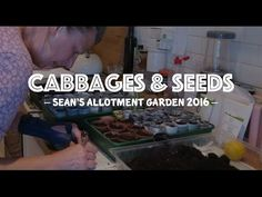 Sean's Allotment Garden: Cabbages & Seeds (S4/EP17)