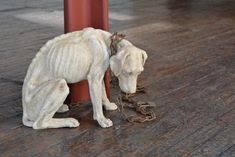 Malnourished Dog 18