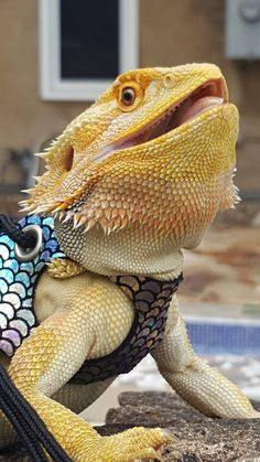 Pink Chameleon Beardied Dragon Little Dragon Pinterest - Majestic dragon lizard caught playing leaf guitar indonesia