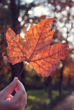 Mabon 🍁 Autumn Equinox