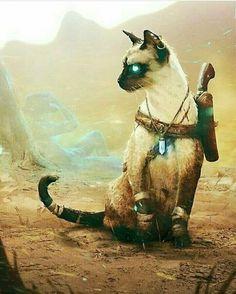Gato arcano do deserto