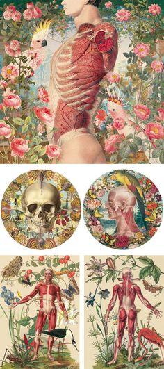 Juan Gatti / Illustration and painting series - Ciencas Naturales