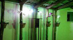 orquideas casa foto: K/P