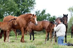 Getting Media Attention for Your Horse Business - Top 10 Benefits