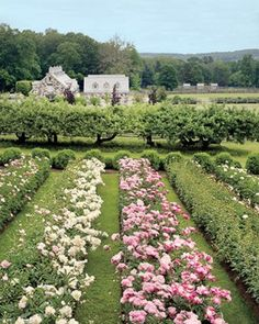 Only Martha Stewart could have such a pristine rose & peonie garden
