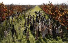 the cost of keeping all these ducks is significantly higher than standard pesticides, the duck army is so effective that the vineyard uses minimal chemicals and is recognized for its sustainability.