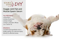 Canine Joint Pain and Muscle Spasm Serum! You will need: 1 drop birch, 3 drops rosemary, 3 drops ginger, 2 drops lavender official, 1 ounce carrier oil Directions: Combine all ingredients into a bottle, gently mix well and apply directly to affected areas. Happy National Dog Day, Muscle Spasms, Carrier Oils, Four Legged, Natural Remedies, Birch, Serum, Lavender, Wellness