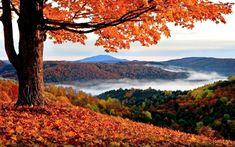 Gambar Pemandangan Alam - Musim Gugur