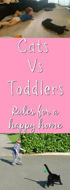 Kitties vs toddlers, we answer - how do we keep the peace when they are both growing up together? and what rules do we set for each of them?
