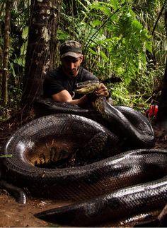 #EatenAlive #PaulRosolie #Amazon #Anaconda #Discovery #DiscoveryChannel