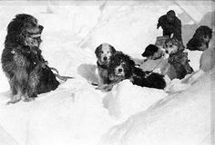 Shakespeare the dog and team, Frank Hurley 1915
