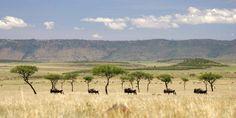 Kenya-Saruni-Mara-Landscape.jpg (1400×700)