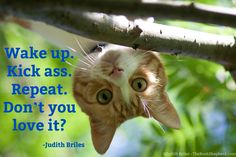 Judith Briles is a book publishing expert, self-publishing expert, indie publishing expert. She is a blunt, butt-kicking, benevolent book coach. Shepherd Book, Butt Kicks, Writer Quotes, Self Publishing, Authors, Cat Lovers, Indie, Action, Cats