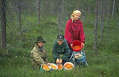 You may pick wild berries and mushrooms, as long as they are not protected species. Protected Species, Social Studies, Geography, Biology, Finland, Science, Mushrooms, Berries, School