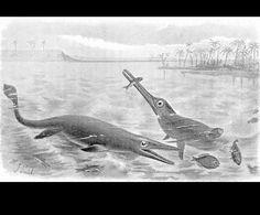 Ichthyosaurus by Joseph Smit (1836-1929) from Extinct Monsters 1892 England