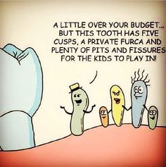 Dentaltown - A little over your budget... but this tooth has five cusps, a private furca, and plenty of pits and fissures for the kids to play in!