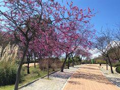 Parque de la Paloma, Benalmadena Costa, Benalmadena, Sidewalk, Summer, Travel, Sun, Parks, Spain, Vacation