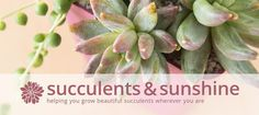 Succulents and Sunshine - helping you grow beautiful succulents wherever you are