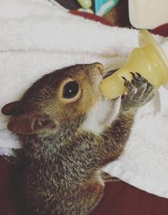 Sarah Scruggs was determined to nurse a baby squirrel caught adrift in South Carolina's recent floods back to life.