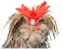 92 Chicken breeds with pictures and breed standards info......