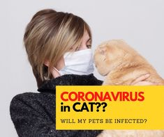 "When you are searching for the phrase ""coronavirus in cats"", we know what you are facing. Best Cat Litter, Litter Box, Searching, Kitty, Pets, Face, Sandbox, Animals And Pets, Kitten"