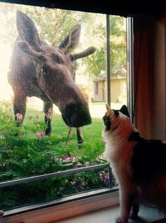 Didn't you know a cat's best friend is a moose? Moose Pictures, Cute Animal Pictures, Beautiful Creatures, Animals Beautiful, Animals And Pets, Baby Animals, Mundo Animal, Tier Fotos, Cute Funny Animals
