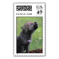 >>>Low Price          Adorable Wolf Puppy Postage Stamps           Adorable Wolf Puppy Postage Stamps we are given they also recommend where is the best to buyShopping          Adorable Wolf Puppy Postage Stamps Review on the This website by click the button below...Cleck Hot Deals >>> http://www.zazzle.com/adorable_wolf_puppy_postage_stamps-172458573415888950?rf=238627982471231924&zbar=1&tc=terrest