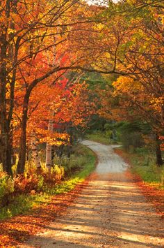 Fall colours on country road (Vermont) by enfi (autumn leaves walks) Autumn Scenes, Fall Pictures, Fall Season Pictures, Fall Harvest, Autumn Leaves, Autumn Fall, The Great Outdoors, Countryside, Nature Photography
