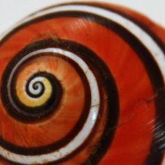 (via bicocacolors: espiral)