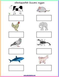 Free printable for kids (toddlers/preschoolers) flash cards/charts/worksheets/(file folder/busy bag/quiet time activities)(English/Tamil) to play and learn at home and classroom. Lkg Worksheets, Animal Worksheets, 2nd Grade Worksheets, Free Printable Worksheets, Alphabet Worksheets, Preschool Learning Activities, Kindergarten Worksheets, Toddler Preschool, Time Activities