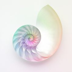 Lovely nautilus shell