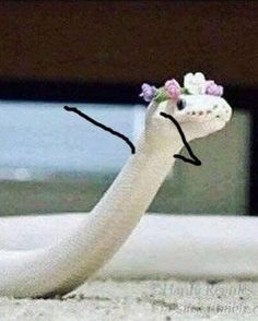 Snakes With Arms Drawn On Make The World A Better Place - World's largest collection of cat memes and other animals Scary Animals, Cute Wild Animals, Cute Funny Animals, Snake Meme, Snake Funny, Snake Doodle, Snake Images, Snake Photos, Snakes With Hats
