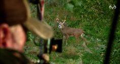 Don't Blink: Here Are 17 Bowhunting Heart Shots in 30 Seconds [VIDEO]