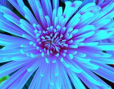Neon blue flower