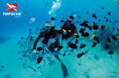 A dive safely escorted !! www.topdive.com