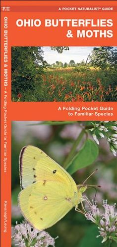 Ohio Butterflies & Moths: A Folding Pocket Guide to Famil...