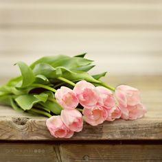 Pink tulips 5 x 5 Original Fine Art Print by Jackierueda on Etsy
