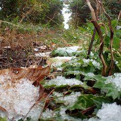 【sbabbbbb】さんのInstagramをピンしています。 《今朝の八丈島は-2℃  久々の雪は見るだけで楽しいですね♪  #八丈島 #離島 #伊豆諸島  #風景 #緑 #自然 #木 #森 #雪 #冬 #楽しい #hachijo #hachijojima #tree #treeworld #forest_captures #nature #naturelovers #snow #snowwhite #snowday #snowing #happy #like》