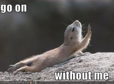 funny animals Pictures, funny animals Images, funny animals Photos on Photobucket. Funny animal pictures with captions. Funny Animal Photos, Funny Pictures With Captions, Funny Animal Memes, Animal Quotes, Cute Funny Animals, Picture Captions, Funny Cute, Funny Photos, Funny Memes