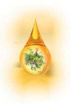 Elixir for Health – Természetes immunerősítő. Egészség egész éven át