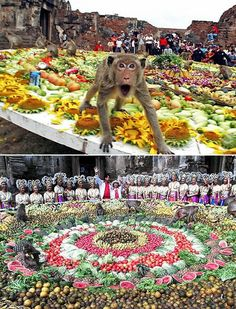 The Monkey Buffet Festival (Thailand) - Every year, all of the province's approximately 600 monkeys are invited to eat fruits and vegetables during an annual feast held in honor of Rama, a hero of the Ramayana, who, it is said, rewarded his friend and ally, Hanuman the Monkey King, with the fiefdom of what is now Lopburi. Organizers of the annual monkey buffet use more than 3,000 kg of fruits and vegetables for the festival.