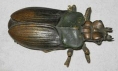 Antique 1880's Bradley Hubbard Cast Iron Scarab Bug Match Safe Holder Striker   eBay