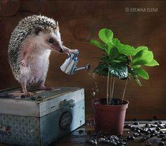 So grows coffee by Elena Eremina