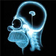 很酷!!辛普森的腦 真小