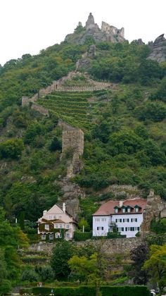 Wachau Valley - Kuenringer Castle, Dürnstein, on the Danube River - Austria River Cruises In Europe, European River Cruises, Places To See, Places Ive Been, Wachau Valley, Danube River Cruise, Viking River, Heart Of Europe, Vienna Austria