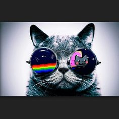 provocative-planet-pics-please.tumblr.com =-= #cat#nyancat#nyankitty#nyan#cat#kitty#cool#glasses#bro#lol#lolz#silence#ears#fur#spave#rainbow#hehe#followme#kewl#stars#space#planets#like#comment by _zzuzu_ https://instagram.com/p/82gbQdr8Is/