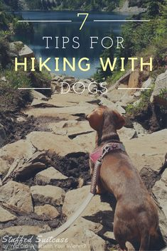 Dog Training Tips Helpful Tips for Hiking with Dogs and what to pack for fun and keeping your furry friends safe! - Helpful Tips for Hiking with Dogs -- including what to pack to make the adventure fun and keep your furry friends safe! Camping Diy, Camping And Hiking, Camping Gear, Camping Hacks, Camping Equipment, Hiking Trails, Camping Store, Camping Kitchen, Camping Desserts
