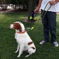 Muito calor para passear? Que tal uma coleira que refresca seu cachorro?