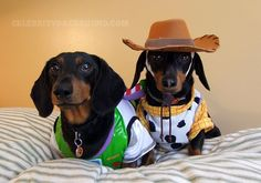Buzz & Woody Dog Costumes