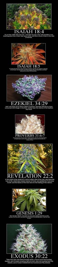 Cannabis in the Bible